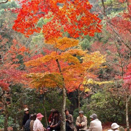 錦秋の紅葉谷公園