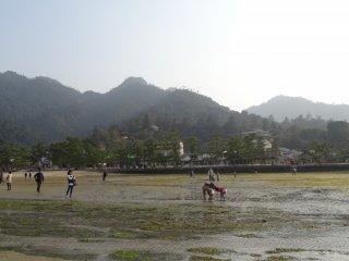 เดินชมหาดทราย และสาหร่ายทะเลหลากหลายชนิด