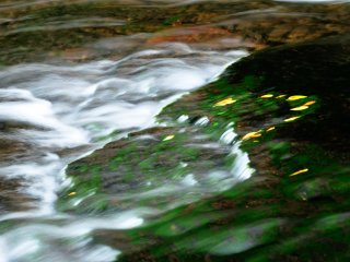 As folhas caídas enredadas no musgoe o fluxo enérgicoda água! Admiro a expressividade da Natureza.