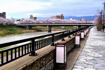 <p>Lanterns lining the stone-paved sidewalk of Asuwa River</p>