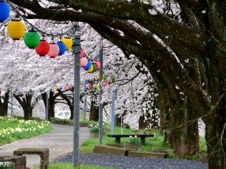 Dù đang là lễ hội mùa xuân nhưng không có ai ở đây vào các ngày trong tuần