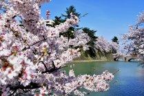 Le Château de Fukui au Printemps