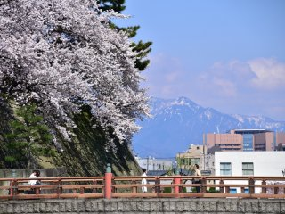 雪の残る山並みを背景に見る御本城橋とお濠の桜