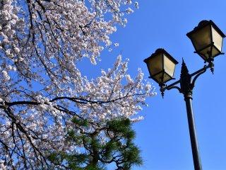 欧風ランプと日本の桜、松のユニークな取り合わせ