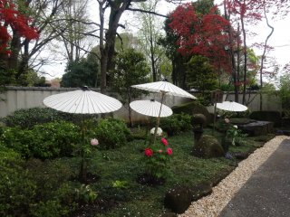 Peonies protected by paper umbrellas at the Ueno Toshogu garden