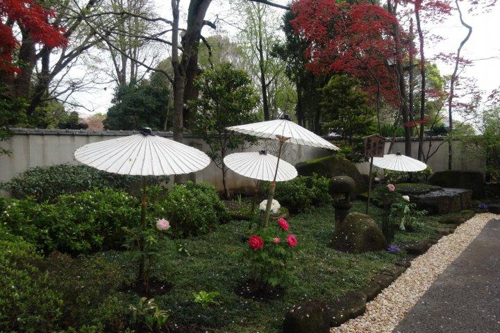 Peony Garden at Ueno Toshogu