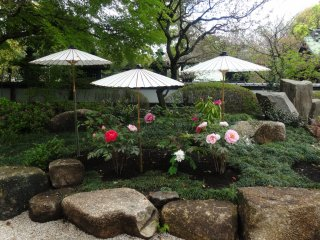 The garden is located right next to the Ueno Toshogu Shrine