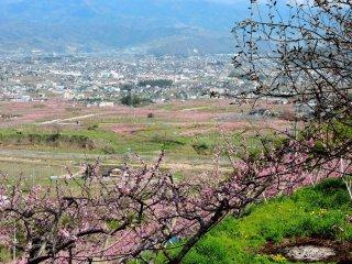 A view over Koshu City from Budo-no-Oka (the name means 'Grape Hill')