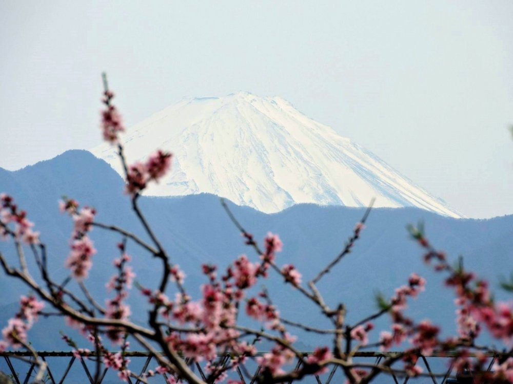 Mount Fuji with peach blossoms