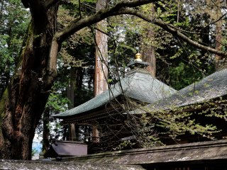 Graceful roof shapes among the trees