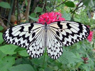 Taketomi tự hào với sự đa dạng về những loài động thực vật xinh đẹp