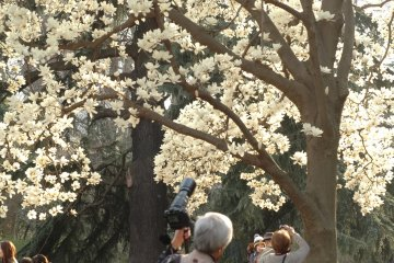 Mùa xuân ở Shinjuku Gyoen