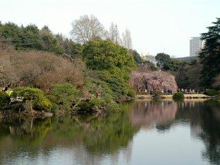Những bông hoa màu hồng phản chiếu trên mặt nước tĩnh lặng của một trong nhiều ao nước trong công viên.