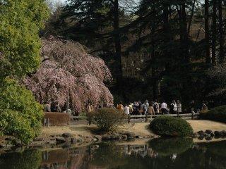 Du khách có thể chiêm ngưỡng những món quà của mùa xuân trong bầu không khí thanh bình.