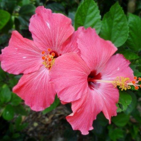 ดอกไม้ของทะเคะโทะมิ