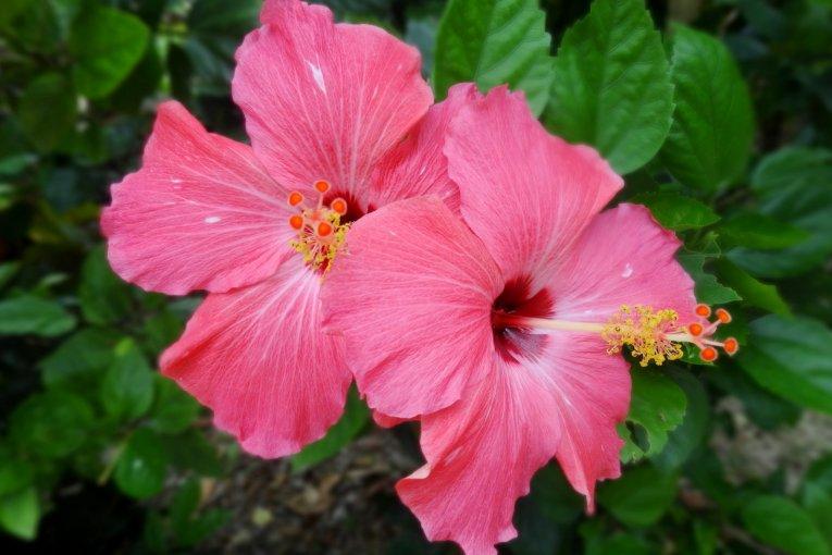 Những loài hoa trên đảo Taketomi