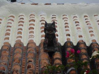 Другой сиса сидит как охранник на своей крыше