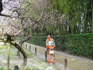 สาวสวยในชุดกิโมโนกับดอกพลัม