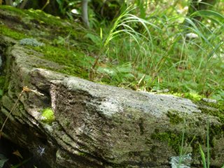 Moss coated stones are really slippery