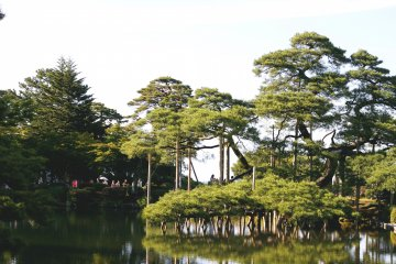 <p>A scenic shot of the some pines over the pond</p>