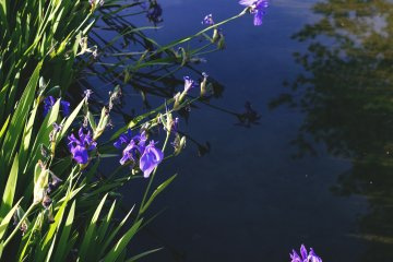 <p>Flowers at the edge of a river</p>