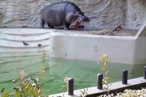 Ueno Zoo, Taito-ku