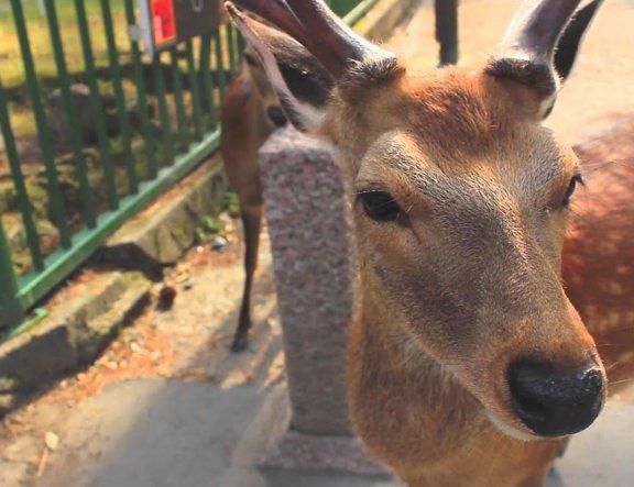 Nara: A Antiga Capital