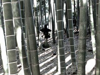 Datanglah awal pada pagi hari atau petang untuk melihat bayangan yang membuatnya semakin magis,Kuil Hokokuji, Kamakura