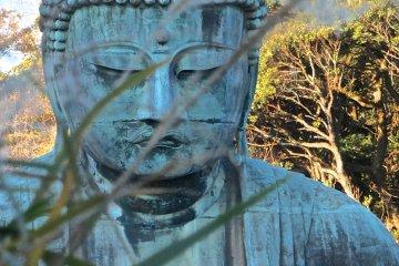Kamakura's Daibutsu: Early December