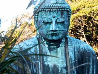 Daibutsu looks modest and almost shy here