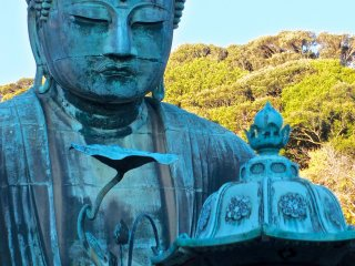 Daibutsu in the late afternoon sun