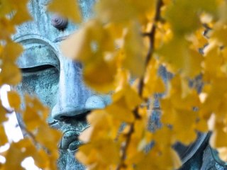 Daibutsu hiding behind some autumn leaves