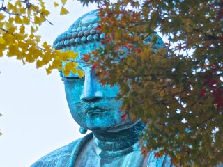 Daibutsu is wonderful to see no matter what the season