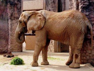 У слонов тоже перекус