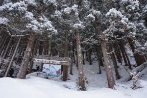 ทางเข้า build อารมณ์มาก กลางป่ายามหิมะตกจริงๆ