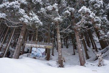 <p>ทางเข้า build อารมณ์มาก กลางป่ายามหิมะตกจริงๆ</p>