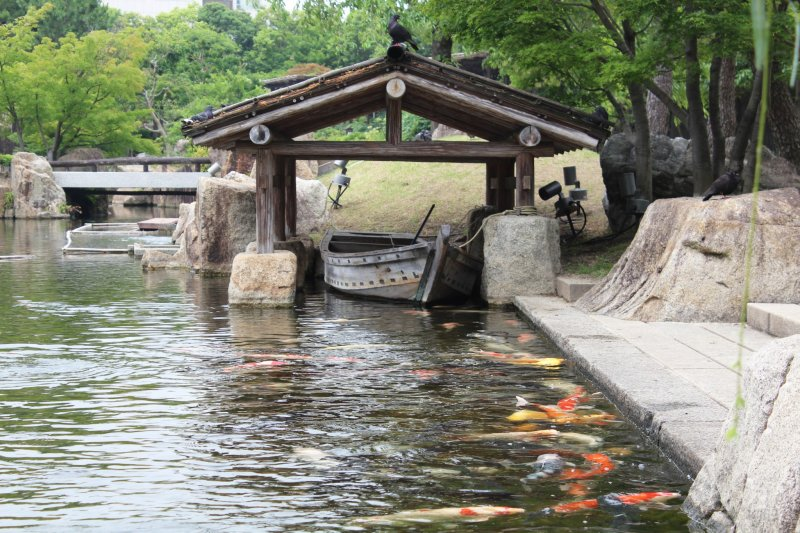 <p>An alluring setting to complement an array of extremely colorful koi fish</p>