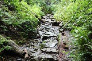 Le trail numéro 6 suit en partie un petit cours d'eau, en plein milieu de la fôret