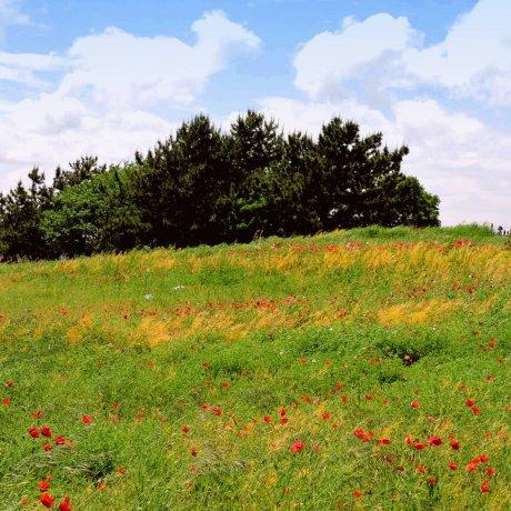 ความงามแห่งสวนคะไซ รินไก