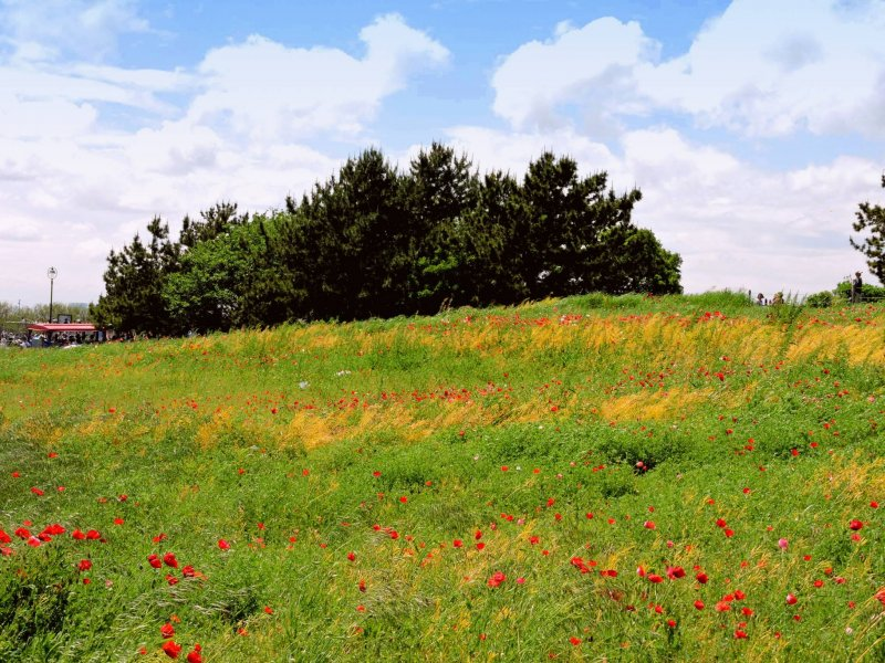 <p>You can imagine yourself in the countryside, not in the center of Tokyo</p>