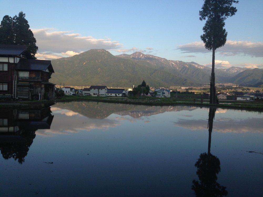 Hình ảnh phản chiếu của cái cây và ngọn núi trên mặt nước là một khung cảnh ấn tượng và thường thấy ở nguồn nước của những đồng lúa không nằm trên núi.