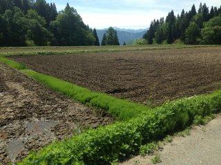 Một cánh đồng còn bỏ không, sẽ sớm gieo hạt trong mùa.
