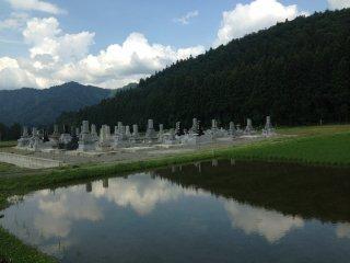 Một nghĩa trang Phật giáo nằm gần cánh đồng đã cấy được một nửa.