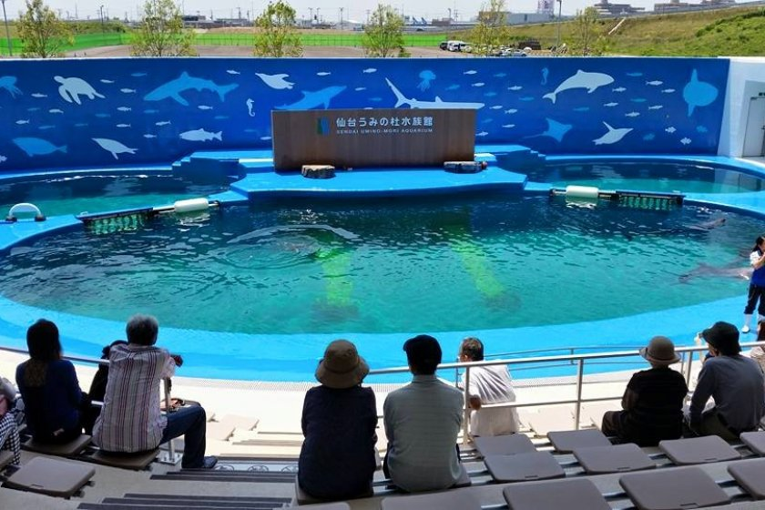 Visitors await the start of the dolphin show