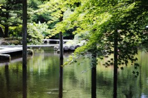 The pond is surrounded by low hanging trees and colorful flowers.