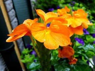 Яркий летний цвет