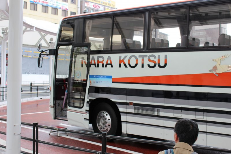 It comes from the reflective decal of a deer that is on many buses in that town (Nara, Japan). Examples here and here.