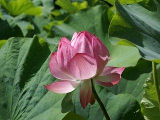 De manhã cedo é o melhor momento para apreciar as flores