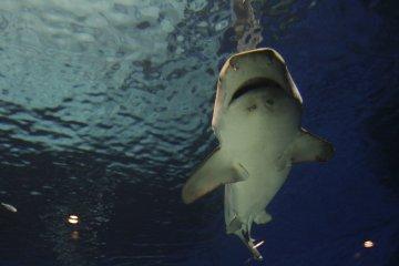 Okinawa Ocean Expo Park & Aquarium
