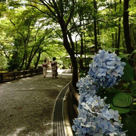 Taman Bersejarah Tenryu-ji